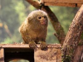Karaimiškos vaišės ir apsilankymas Zooparke